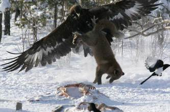 Dont_mess_with_eagles
