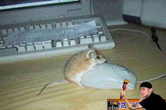 Confused20mouse
