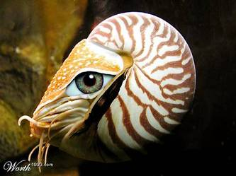 Brandys_nautilus_eye_photoshop_entry